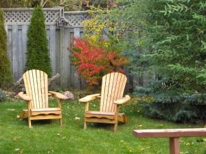 Fall colors in backyard