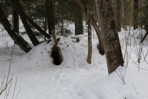 I believe this could be a winter Bear Den? What do You think? let me know