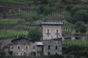 Wine Region of Italy.