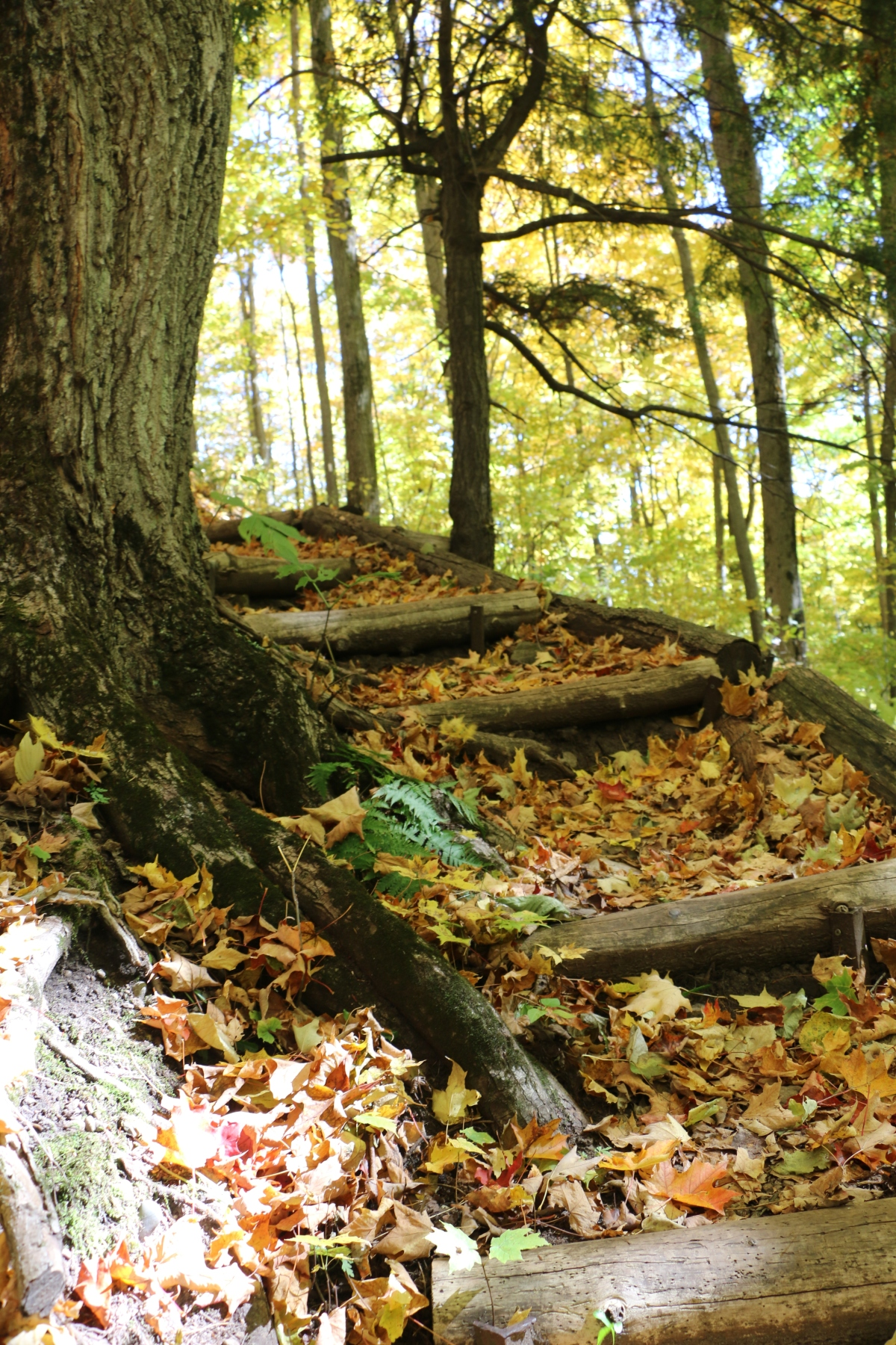 Thanksgiving Hike AT Boyne Valley ProvincialPark