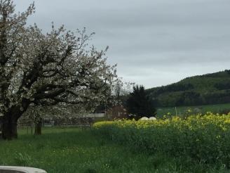 Moehlin is spring bloom
